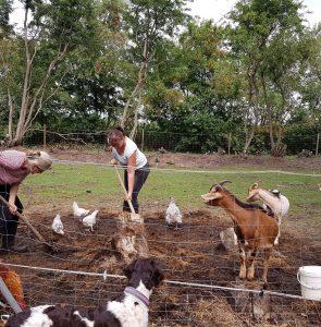 4 helfende Hände und glückliche Hühner